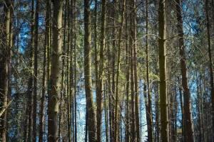 В Брянской области из-за жары запретили посещать леса