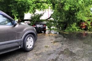 В Брянске рядом с главным Сбербанком дерево раздавило три машины