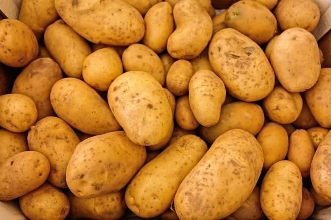 На Брянщине проверили 57,4 тысячи тонн семенного картофеля