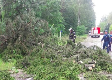В Брянске ураган повалил 25 деревьев