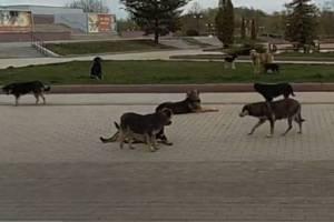Под носом брянского губернатора Богомаза развели «собачий беспредел»