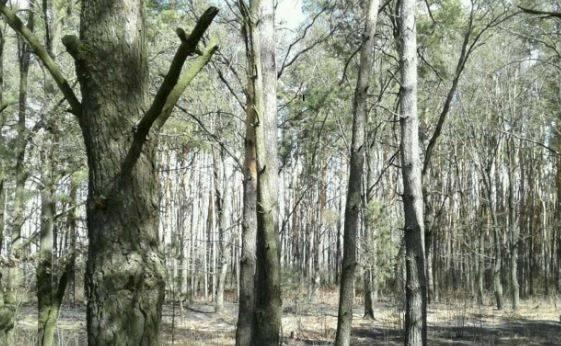 В Почепском районе произошел лесной пожар