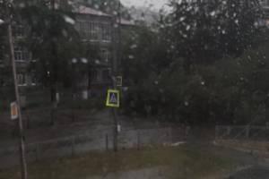 В Брянске рухнувшее дерево перекрыло дорогу у школы №39