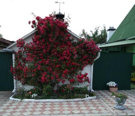 У жителя Новозыбкова украли садовую вазу с «историей»