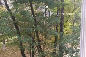 Брянцы просят за 500 рублей снять кота с высокого дерева
