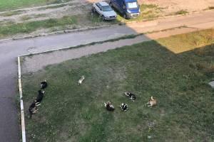 В Брянске стая из 11 собак затерроризировала жителей Володарки