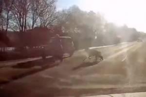 Под Брянском женщина с собакой бросилась под машину