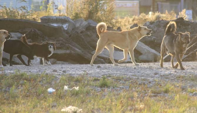 В Карачеве бездомные псы набросились на малышей из детсада