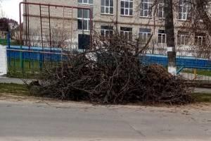 В Клинцах возле школы появилась свалка из спиленных деревьев