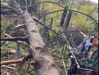 В Клинцах сухое дерево повредило несколько могил на кладбище