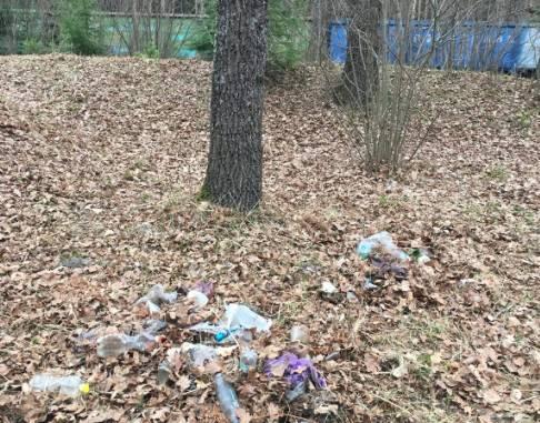 У поселка Белые Берега лес завалили мусором