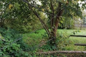 В Брянске сорванные ураганом провода превратили жизнь пенсионерки в ад