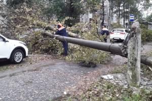 В Брянске сильный ветер повалил столб на аллее Металлургов