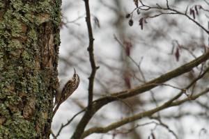 В «Брянском лесу» насчитали более 30 видов птиц