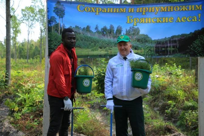 Африканские студенты посадили сосны и ели в брянском лесу