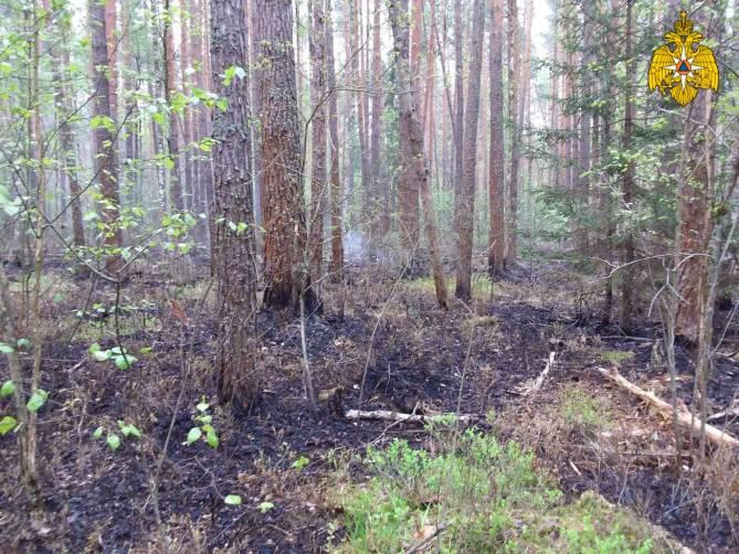 В Клетнянском районе произошёл лесной пожар