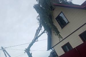 В брянском поселке Октябрьский ураган повалил деревья на дома