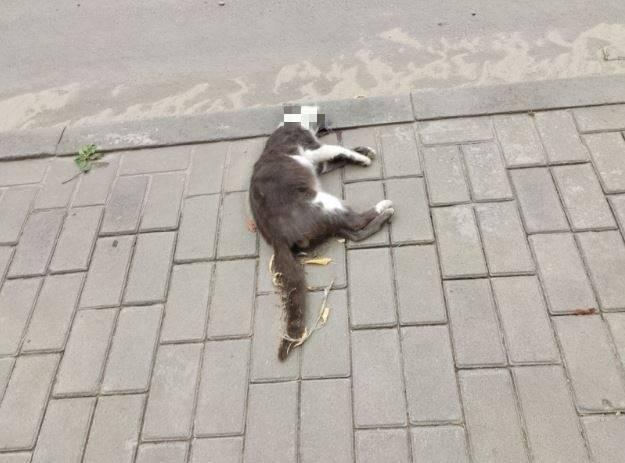 В Клинцах наступил день мертвых животных