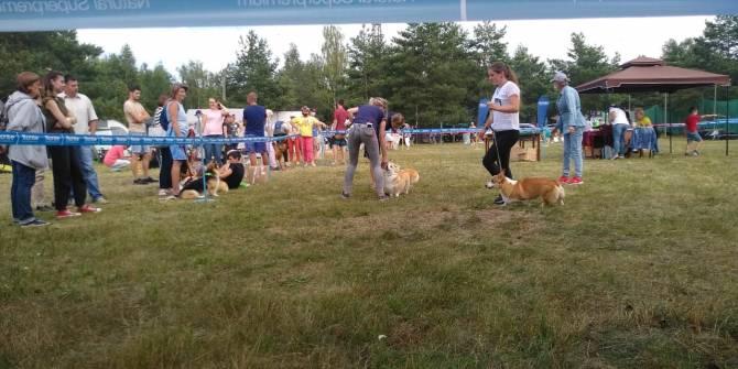 В Брянске прошла выставка всех пород собак «Деснянское лето»