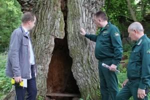 В брянских лесах появятся смотровые площадки вблизи уникальных деревьев