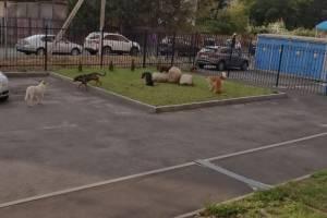 В Брянске стая собак захватила двор многоэтажки