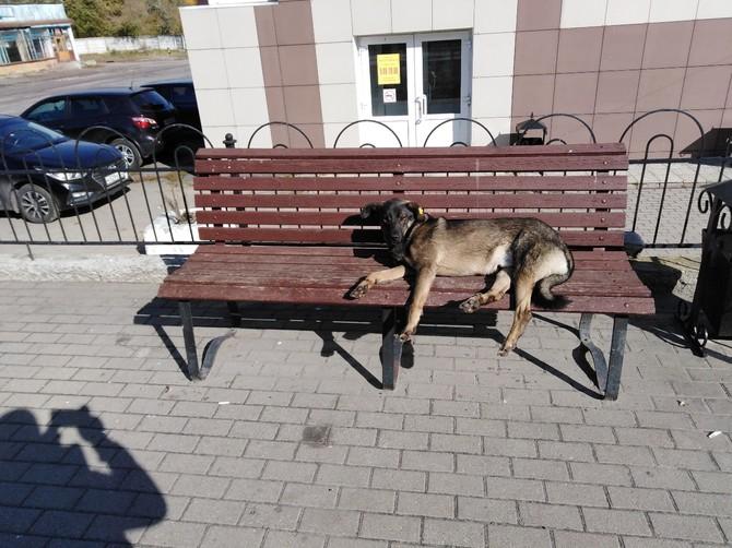 В Брянске нашли место обитания самых культурных собак