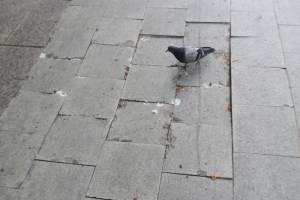 В Брянске на бульваре Гагарина пророс мох и развалилась новая плитка