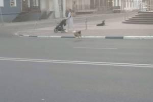 В центре Брянска на парня напала огромная стая собак