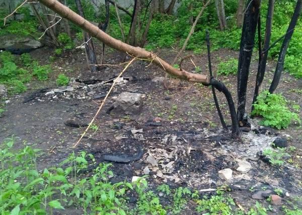 В Бежицком районе Брянска нелюди сожгли собачьи домики