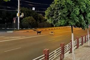Брянские власти рассказали, почему не убивают бродячих собак