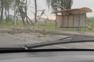 Под Брянском на трассе дерево упало на остановку