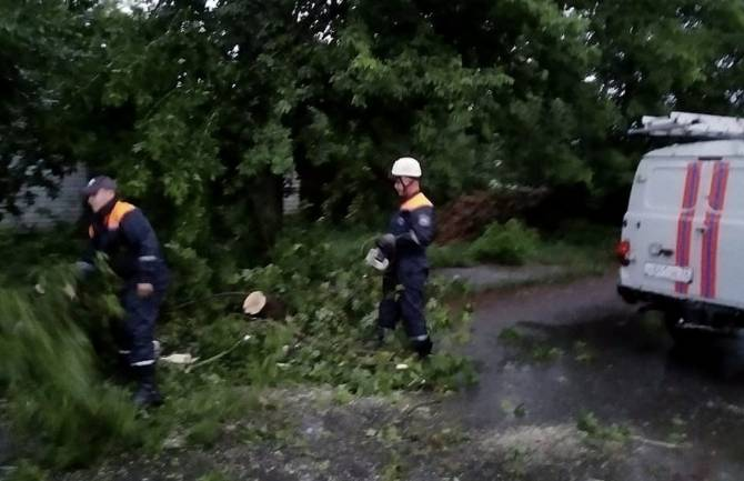 В Брянске за сутки ветер повалил 4 дерева