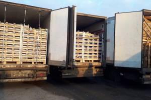 В Брянскую области не пустили 160 тонн фруктов из Белоруссии